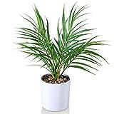 Kazeila Mini Plantas Falsas en macetas, Palma de Areca Artificial de 40 cm para Oficina en casa, Hotel, librería, cafetería, decoración Moderna