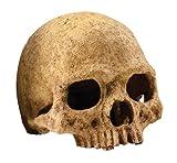 Exoterra Décoration Primat Skull pour Reptiles et Amphibiens...