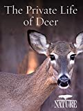 Nature: The Private Life of Deer