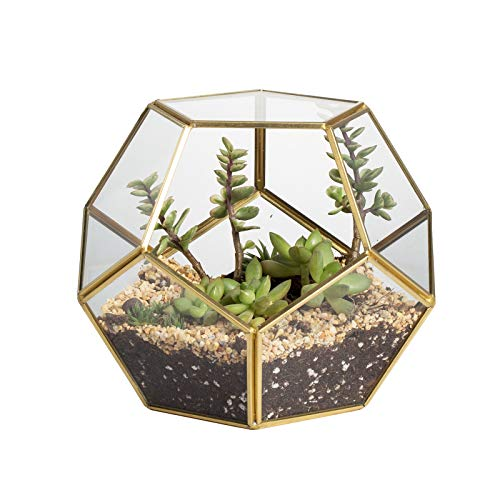 Gold Glass Geometric Terrarium, Home Tabletop Decor, Pentagon