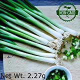 Gaea's Blessing Seeds - Organic Scallion 1000+ Seeds Non-GMO Evergreen Hardy White Nebuka 90% Germination Rate 2.27g