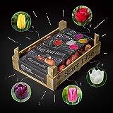 Scatola di tulipani 'Unicorn Treasure' di BOLT Amsterdam - bulbi di tulipano - 100 pezzi - 5 colori - Ideale come regalo