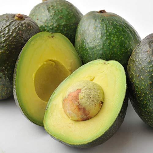 南国フルーツ メキシコ産アボカド 6玉(200gx6玉)