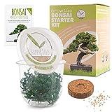 GROW2GO Bonsai Kit incl. eBook GRATUITO - Set con mini invernadero, semillas y tierra - idea de regalo sostenible para los amantes de las plantas (Pino Australiano)