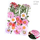 Daimay 35 PCS Natural Dried Flowers Mixed Multiple Real Pressed Flowers Assorted Colorful for DIY Resin Jewelry Nail Art Floral Decors - Style A