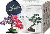 Valeaf Bonsai Starter Kit - SUMMER SALE - criar su propio Bonsai rbol - Anzuchtset incluida 4 variedades de semillas Bonsai & accesorios - para principiantes - el regalo ideal para el rbol plantar