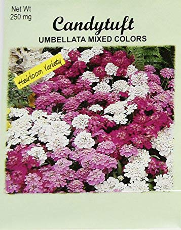 Set of 50 Flower Seed Packets! Flower Seeds in Bulk (50, Candytuft)