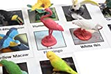 Curious Minds Busy Bags Montessori Tropical Bird Animal Match - Miniature Exotic Bird Animal Toy Figurines with Matching Cards Preschool Matching Game
