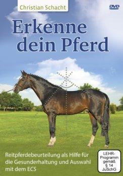 Determine Your Horse