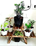 (FAZZILET) Plant Stand/Coffee Table Cum Side Table for Living Room Kids Furniture Outdoor Table (Planter Stand, 66 x 28 x 23 cm)