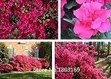 10 colores Rododendro semillas en macetas semillas del rbol de la azalea biji, variedades completa 200 partculas / bolsa de la planta Bonsai Garden