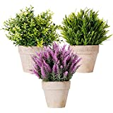 New rui cheng Lot de 3 mini plantes artificielles en plastique - Lavande véritable...