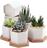 7WUNDERBAR Macetas de suculentas, macetas de Cactus, macetas pequeas, macetas pequeas, macetas para Plantas, cermica con platillo de bamb de 6,5 cm, Blanco, Juego de 6