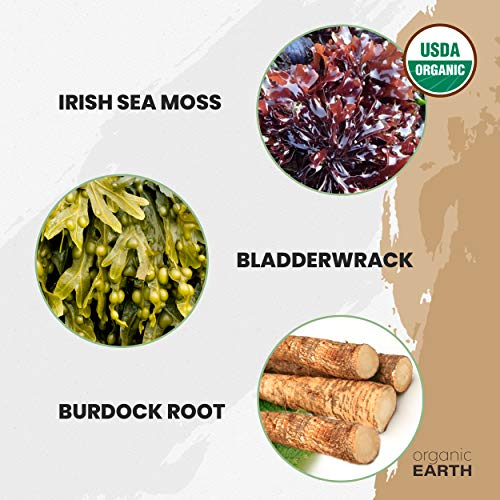 Organic Earth Irish Sea Moss Powder (8 Ounces) Super Cell Body Food - Wildcrafted Irish Sea Moss Bladderwrack Plus Burdock Root Powder - Natural Irish Moss Seaweed - USDA Certified Organic 4