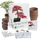 Plant Theatre - Kit de germinacin bonsais