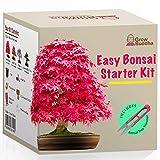 Kit Haga crecer su propio Bonsi - Cultiva fcilmente 4 tipos de rboles Bonsi con nuestro kit de semillas de Bonsi completamente para principiantes - Kit de semilla, Idea nica de regalo