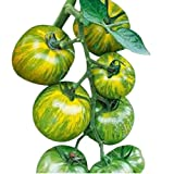 Green Zebra Heirloom Tomato Seeds - Large Tomato - One of The Most Delicious Tomatoes for Home Growing, Non GMO - Neonicotinoid-Free.