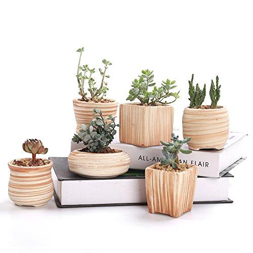 Sun-E 3 Inch Ceramic Wooden Pattern Succulent  Pot 6 in Set