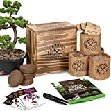 Bonsai Tree Seed Starter Kit - Mini...