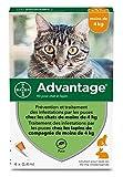 ADVANTAGE Chat – Anti-Puces pour Chats – Moins de 4KG - 4...