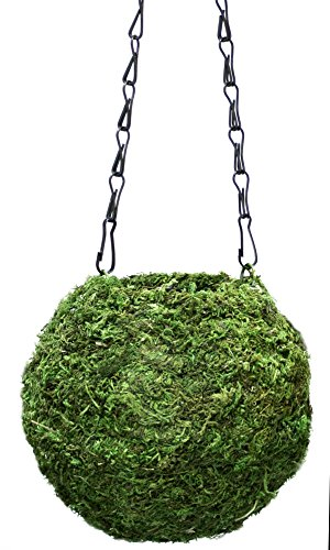 SuperMoss (29348) Kokedama Planter, 6', Fresh Green