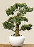 Home Collection Muebles, decoracin, plantas artificiales - Ciprs bonsai artificial en macetero - material: plstico - Color natural - dim. A aprox. 48 cm