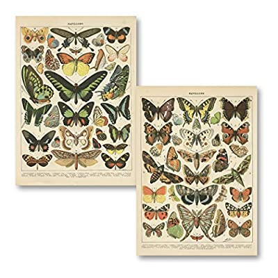 Size: 11x14 Makes a great gift Printed on high-quality paper Papillon Butterflies Made in the U.S.A.