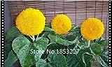 Vendedores calientes 100pcs Semillas Semillas de herradura de oro Jade Pequea cascada dinero Hierba Diaolan Bonsai Home Garden
