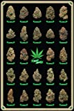 Frame USA Best Buds Marijuana Poster (24x36) Individually Rolled