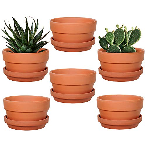 6-Pack 5 Inch Terracotta Shallow Succulent Pot with Saucer for Succulent Cactus Plant Pots with...