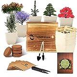 Smalltongue Indoor Bonsai Tree Garden Kit, with 6 Pots and All Supplies You Need, Indoor Bonsai Tree Garden Starter Kit for Beginner, Adult, Kitchen, Balcony, Window Sill