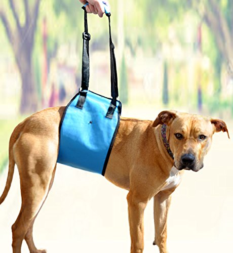 AMZpets Large Dog Lift Harness. Helps Dogs with...