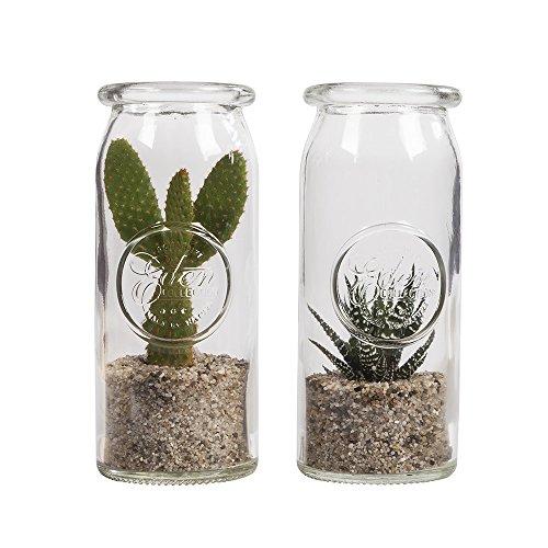 Plante d'intérieur de Botanicly – Cactus raquettes – Hauteur: 30 cm – Opuntia