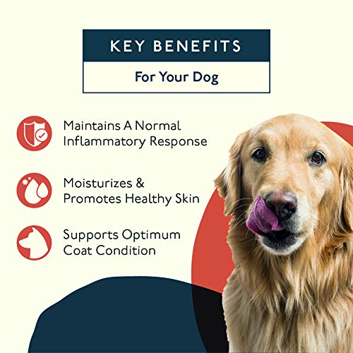 Petlab Co. Itch Relief Chews for Dogs | Anti Itch Dog Chews for Soothing Itchy Dog Skin | Turmeric Curcumin, Fatty Acids, and Hone 3