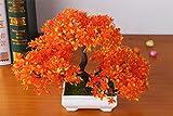 JingweiSemillas de bienvenida 10Pcs rbol de pino, plantas ornamentales, semillas de rboles de hoja perenne bonsai bonsai de interior semillas de plantas proteccin contra las radiaciones , orange