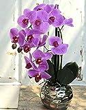 artplants.de Orchidée Artificielle Phalaenopsis Emilia, Cache-Pot, Rose...