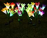 BOOTOP Solar Flowers...image
