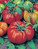 Tomato, Beefsteak, Heirloom, 25+ Seeds, Great Sliced Tomato, Delicious