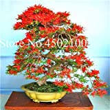 Bloom Green Co. 100 Unids Exticos Azalea Japonesa Bonsai, Azalea Rododendro Mixta, Azalea Flor Bonsai rbol Diy Seedssplant Para Jardn De Su Casa: 16