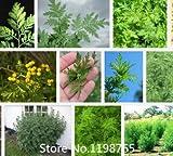 Promocin 2016 Semillas Nueva Artemisia annua Jardn de Plantas Bonsai Semillas-100pcs Variedades de semillas de rboles de hoja perenne inters Nove