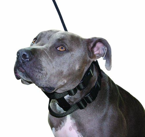 Original Illusion Collar Trainingshalsband & Leine des amerikanischen Hundeflüsterer Cesar Millan, Größe S, Schwarz