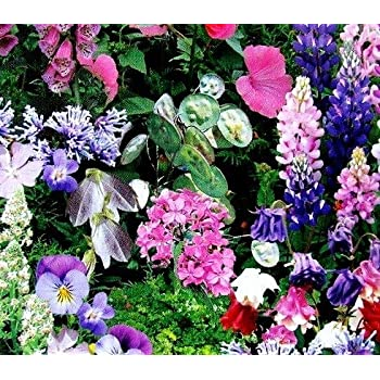 Shade Loving Plants Mixed Seeds Amazon Co Uk Garden Outdoors
