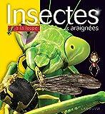 Insectes et araignées