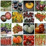 160 graines de tomate dans 16 variétés de substances nutritives rares et riche,...