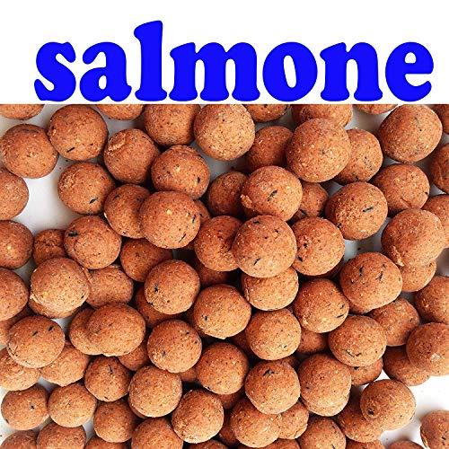 Generico BOILIES BOILE al Salmone Pesce BOILES CARPFISHING DIAM 20 Pesca Carpa PASTURA Esca INNESCO Aroma