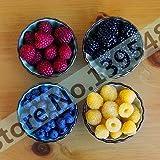 4 types de couleur 4000 PCS graines de framboise (1000 bleu, 1000black, 1000 rouge, jaune) 1000 plantes de fruits délicieux