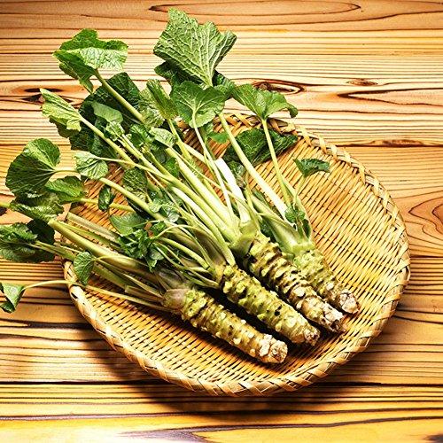 100 PC semillas semillas de rábano picante japonés Wasabi