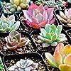 Cactus Suculento Planta Mezcla de Suelo - Home Garden Potting Soil Growing Cacti - Coco de Ahorro de Agua #4