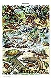 zhizunbao Rétro Adolf Milo Encyclopédie Affiche Reptile Écrevisses Poisson Classique...