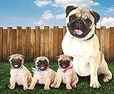 Pug Dogs in The Yard Fleece Throw Blanket 50' x 60'